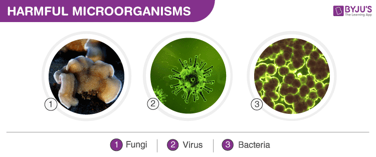 Beneficial and harmful effects of microorganisms pdf